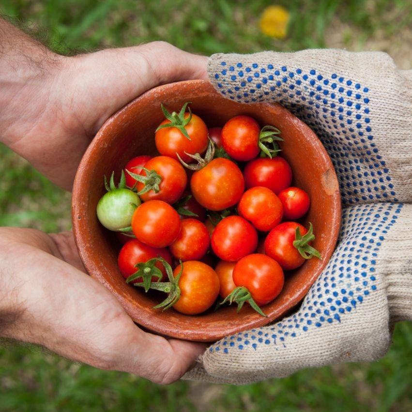 Qual será a cultivar do mês deNovembro?