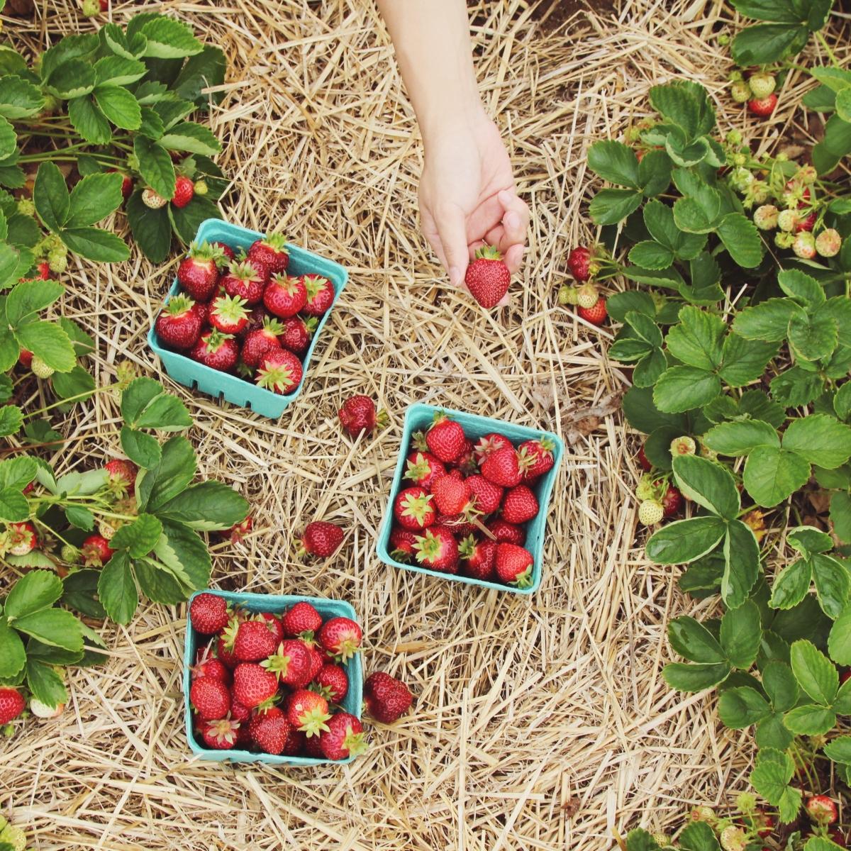 Sim, é possível cultivar vegetais semagrotóxicos!